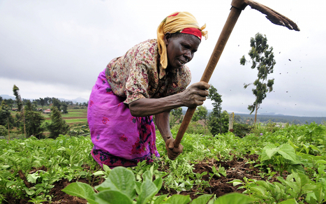 Women's Role in Achieving a Food Secured Africa | MyRoundUp | Scoop.it
