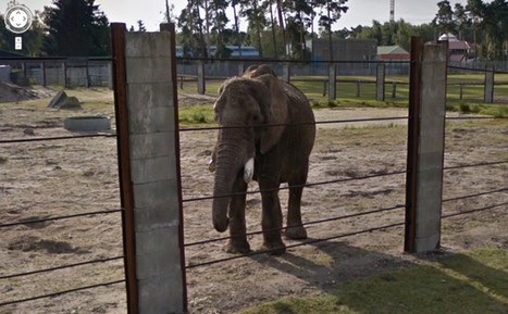 Tour Some of the World's Most Famous Zoos, Now on Google Street ... | Fiberglass | Scoop.it