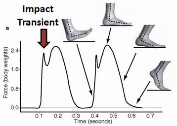 Running Barefoot: Biomechanics of Foot Strike | Mindfulness & Mindful Running | Scoop.it