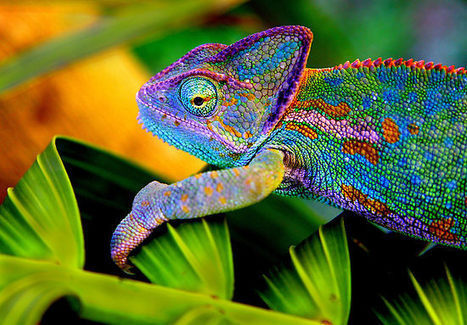 Loyalty in Wealth management requires 'Chameleons' | Cater Allen - Industry News Snippet | Scoop.it