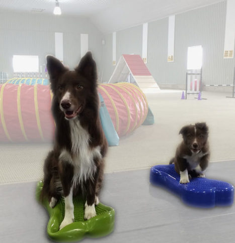#Agility Transformations in Dog Training: The 2016 Recallers Video Contest Day One | Modern dog training methods and dog behavior | Scoop.it