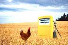 Research: Can the biofuel industry benefit poultry   Sustainable Livestock development   Scoop.it
