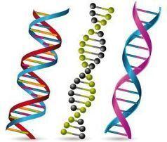 Tres nuevos ensayos clínicos con células madre en Andalucía - Ideal Digital | La Andalucía Libre | Scoop.it