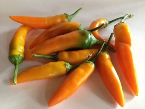 Late-Season Garden Vegetables | Organic News & Devon's Worldviews | Scoop.it