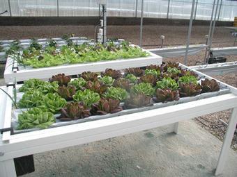 Cómo hacer jardines hidropónicos en casa. | Cultivos Hidropónicos | Scoop.it