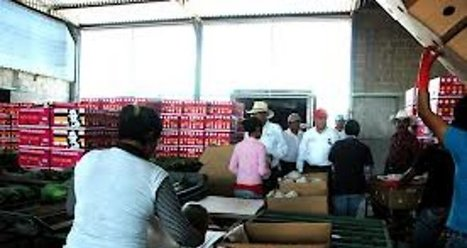 Productores de papaya se alistan para incursionar en el mercado ... - El Semanario Sin Limites | Emprende | Scoop.it