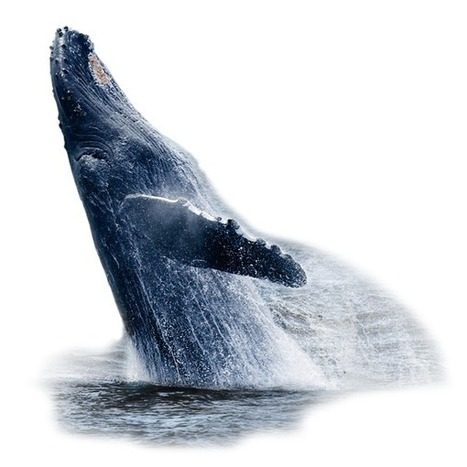 Croisières Dufour | Excursions aux baleines à Tadoussac dans la région de Charlevoix, Québec | NYC Quebec Trucs utiles | Scoop.it