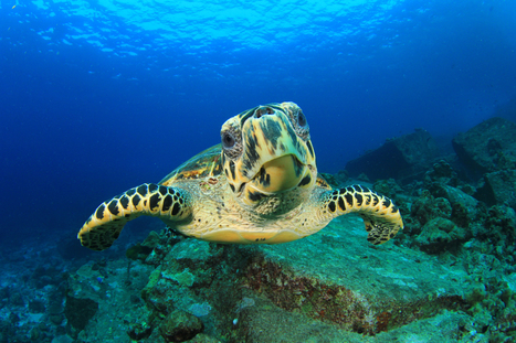 Revealed: the World's Top 100 Dive Sites | Utila | Scoop.it