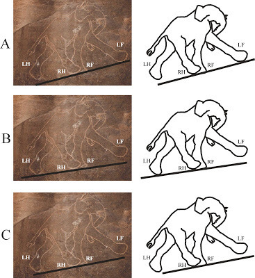 Cavemen were better at drawing animals than modern artists | Graphic Novels in Classrooms: Promoting Visual and Verbal LIteracy | Scoop.it