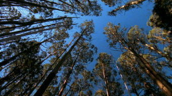 Catalyst: Tree Deaths - ABC TV Science | Australian Plants on the Web | Scoop.it
