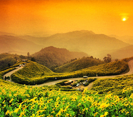 Gorgeous Yellow Field- Tung Dok Bua Tong in Thailand | Beautiful Landscapes in Thailand | Scoop.it