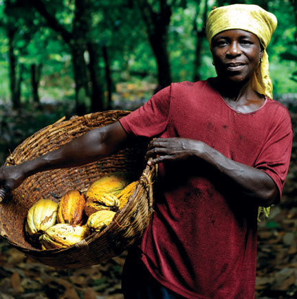EDES Cocoa Standards / Normes Cacao | Banania Consulting | Scoop.it