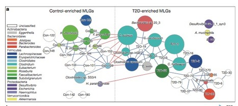 Association study of gut microbiota in type 2 diabetes | Microbes Inside | Scoop.it