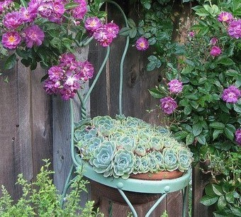 Succulents | Upcycled Garden Style | Scoop.it