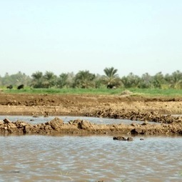 Adaptation to the Impacts of Climate Change: Cl... | Climate Smart Agriculture | Scoop.it