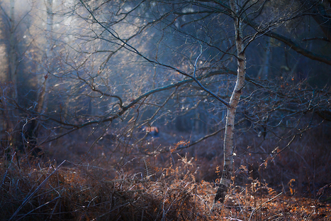 Dramatic Nature Photos Illuminate the Quiet Mystery of the Woods | Le It e Amo ✪ | Scoop.it