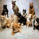 Well Known Dog Breeds in the Market | Pets Health | Scoop.it