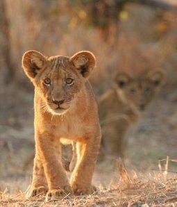 5 day Kruger Park Camping Safari | Kruger Tours | Kruger & African Wildlife | Scoop.it