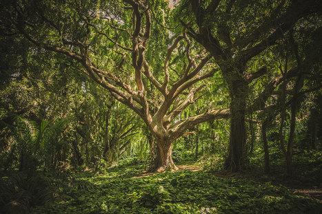 Une découverte sans précédent : les arbres partagent leur nourriture entre eux par leurs racines | Nouveaux paradigmes | Scoop.it