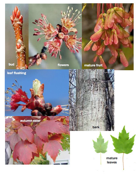 Phenology: Fun and Fulfilling | Plant Talk | Garden Libraries | Scoop.it