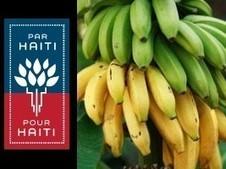 Haïti – Agriculture : Lancement d'un programme intensif de ... | T'as la bannanne couzain ! | Scoop.it