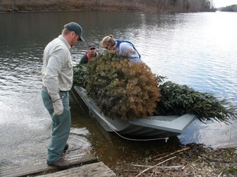 Christmas Trees Recycled Into Fish Habitats Across the Country | Fish Habitat | Scoop.it