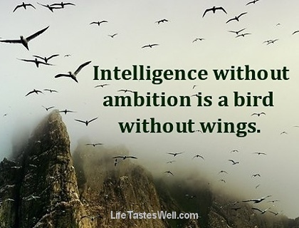 intelligence without ambitions is a bird without wings Intelligence without ambition is a bird without wings intelligence without ambition is a bird without wings finn denne og andre pins på wise words av vaahterapyy.