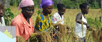 Liberia spending too little on agriculture | Focus on ECOWAS | Scoop.it