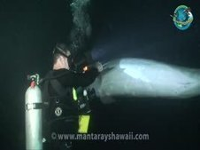 Dolphin seeks help from diver to remove hook and line from its mouth and fin. | MSustainability | Scoop.it