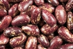 30 Heat-Tolerant Beans Identified, Poised to Endure Warming World | Sustain Our Earth | Scoop.it