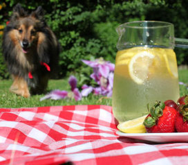 6 Picnic Foods That Could Poison Your Pup | Rodale News | Food for Pets | Scoop.it