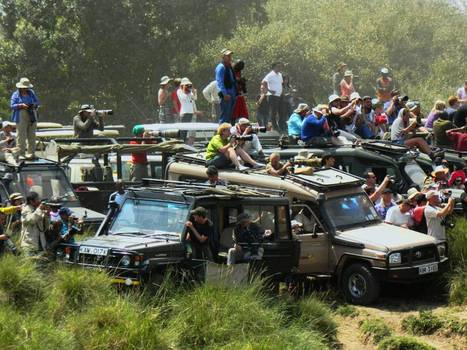 Piling in for the view: A migrating herd in a mad rush ... and some wildebeest | A2 Development | Scoop.it