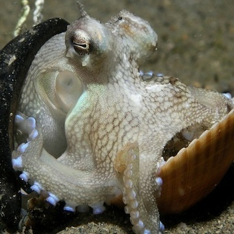 Science finds Octopuses have Consciousness  :-), Scientific American Blog Network | The Integral Landscape Café | Scoop.it