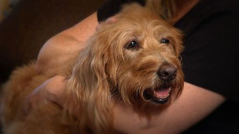 Specialists restore vision to aging pets - WKMG Orlando | Optometry | Scoop.it