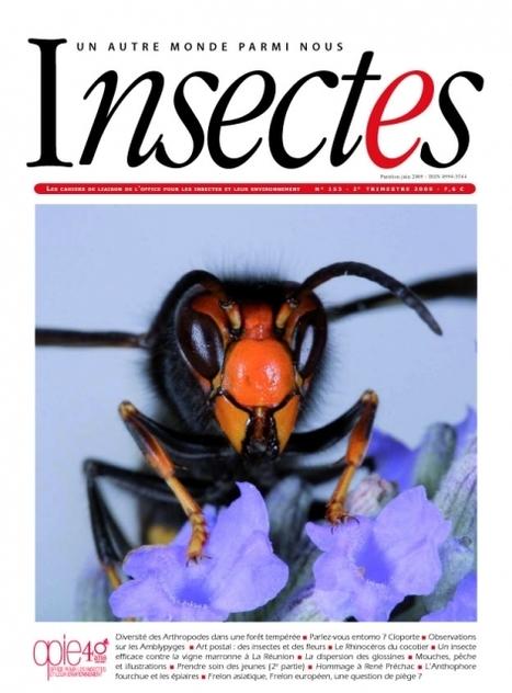 Un dossier complet sur le Frelon asiatique   Insect Archive   Scoop.it