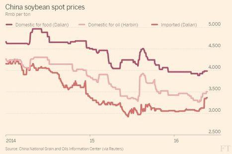 Es un buen momento para vender soja a China | Top Noticias | Scoop.it