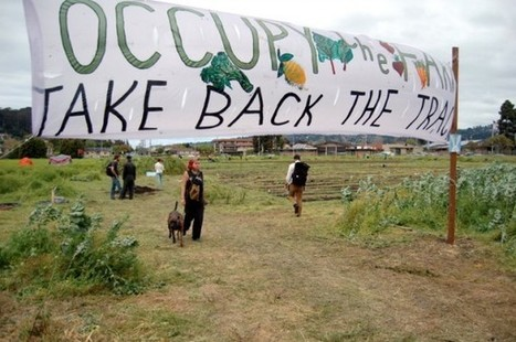 Cal removes latest Occupy the Farm greens at Gill Tract - San Francisco Chronicle (blog)   Vertical Farm - Food Factory   Scoop.it