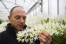 Sniffing out orchids at their best - The Canberra Times | flowering film | Scoop.it