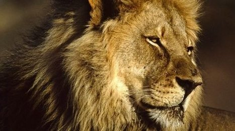 """United Parcel Service: Stop shipping dead animal """"trophies"""". 