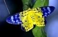 Chasse aux papillons au Vietnam - France Info | Chasse dans le Nord... et ailleurs | Scoop.it