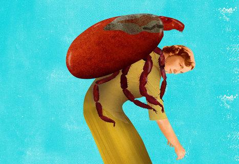 When Lyme Disease Lasts and Lasts | Lyme Disease Perspectives | Scoop.it