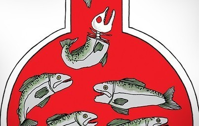 Salmon RIP? |<br/>   <br/>East Bay Express | Food issues | Scoop.it
