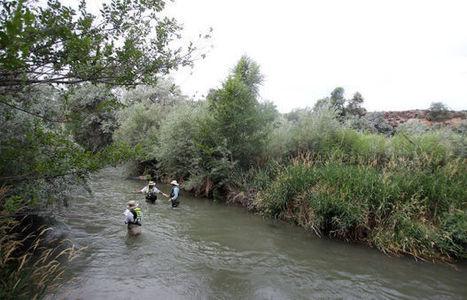 Rock Creek Is Focus of Intensive Study by USGS Scientists - Twin Falls Times-News | Fish Habitat | Scoop.it