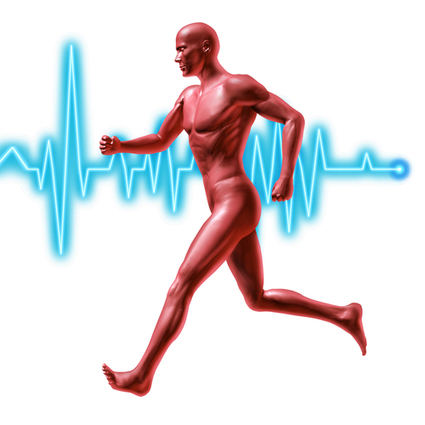 A Heart to Heart about the Effects of Exercise on Cardiovascular Health | HealthWorks Collective | fitness, health&nutrition | Scoop.it