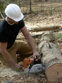 lawrenceville Tree Care, Services, Removal, Trimming GA | Tree Service Lawrenceville | Scoop.it