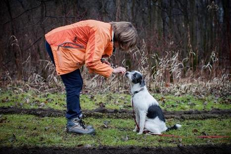 Psychological effects of pets are profound - The Boston Globe | animals and prosocial capacities | Scoop.it