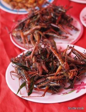 And Bugs on the Menu - Perihelion Science Fiction | Entomophagy: Edible Insects and the Future of Food | Scoop.it