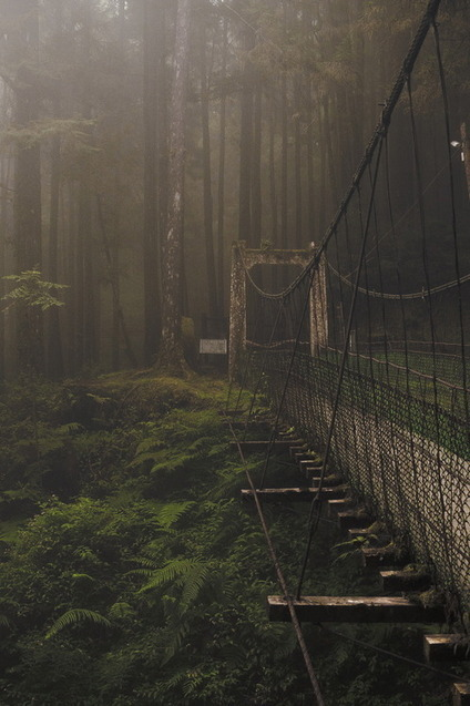 Forest Bridge By -kent- Fog in the forest - Felipe González Photography | Bikes, bridges and Beer | Scoop.it