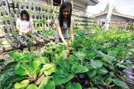 School garden in Philippines responds to community's food needs | School Gardening Resources | Scoop.it