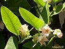 Les plantes différencient les sons... | PréoccuPassions | Scoop.it
